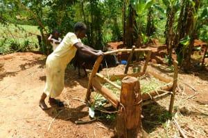 The Water Project: Ebutindi Community, Tondolo Spring -  Feeding The Family Cow