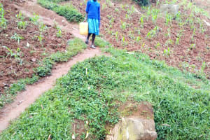 The Water Project: Bumira Community, Madegwa Spring -  Coming To Fetch Water