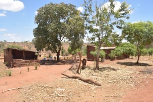 The Water Project: Kathonzweni Community -  Livestock In Compound