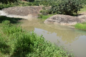 The Water Project: Kyamwao Community -  Water Source