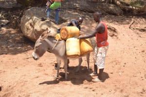 The Water Project: Kathonzweni Community A -  Donkey Carrying Water