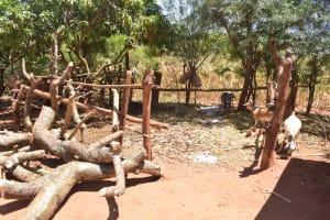 The Water Project: Ngitini Community E -  Livestock Pen