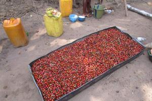 The Water Project: Lokomasama, Bompa, DEC Bompa Primary School -  Plam Karnel