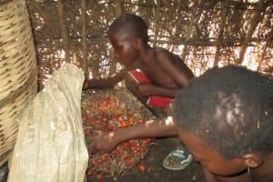 The Water Project: Lungi, Yaliba Village -  Sorting Palm Fruit