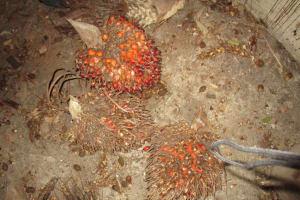 The Water Project: Lungi, Komkanda Memorial Secondary School -  Palm Karnel