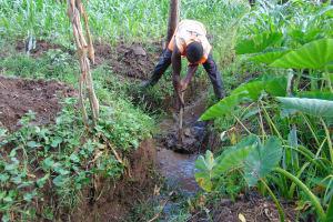 The Water Project: Bukhakunga Community, Mukomari Spring -  Digging Drainage For The Spring