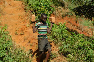 The Water Project: Ibinzo Community, Lucia Spring -  A Boy Carries Bricks Down To The Artisans