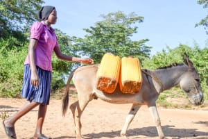 The Water Project: Kasekini Community A -  Donkey Carries Water