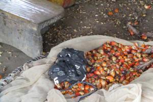 The Water Project: Kamayea, Susu Community & Church -  Palm Kernels