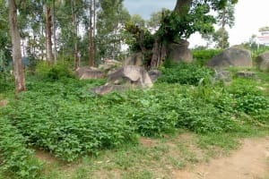 The Water Project: Musasa Primary School -  Kenya School Farm