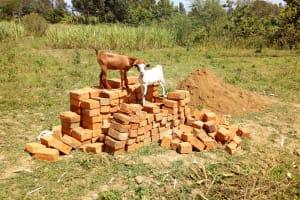 The Water Project: Mukhuyu Community, Kwawanzala Spring -  Bricks For Construction