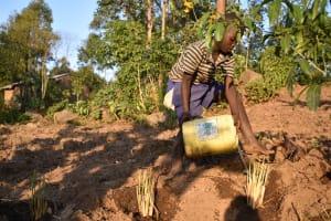The Water Project: Munenga Community, Burudi Spring -  Watering Grass Near Spring To Prevent Soil Erosion