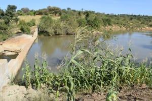 The Water Project: Katung'uli Community B -  Maize Growing Near The Dam