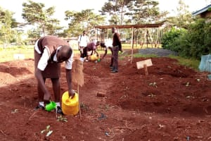 The Water Project: Womulalu Secondary School -  Agriculture Students Using Water To Irrigate Crops For Their Academic Project