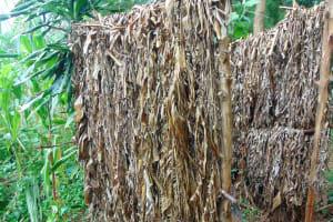 The Water Project: Namarambi Community, Iddi Spring -  Bathroom Made Of Banana Leaves