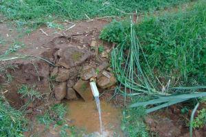 The Water Project: Namarambi Community, Iddi Spring -  Iddi Spring