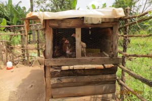The Water Project: Shihingo Community, Inzuka Spring -  Chicken Coop