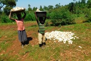 The Water Project: Ewamakhumbi Community, Mukungu Spring -  Kids Collect Maize Harvest
