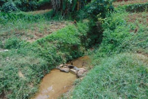 The Water Project: Munenga Community, Francis Were Spring -  Unprotected Francis Were Spring