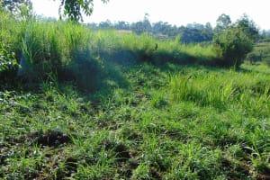 The Water Project: Emurumba Community, Makokha Spring -  Community Farms