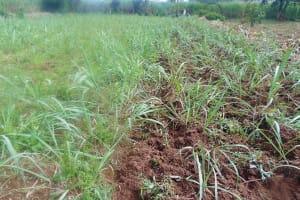 The Water Project: Mukangu Community, Metah Spring -  Community Farm