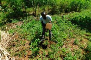 The Water Project: Ewamakhumbi Community, Mukungu Spring -  Farming
