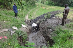 The Water Project: Eshikhugula Community, Shaban Opuka Spring -  Digging Diversion Channel