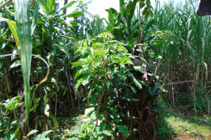 The Water Project: Munenga Community, Francis Were Spring -  Bathroom