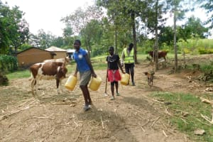 The Water Project: Emurumba Community, Makokha Spring -  Headed For The Stream