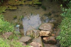 The Water Project: Kalenda B Community, Lumbasi Spring -  Algae In The Water