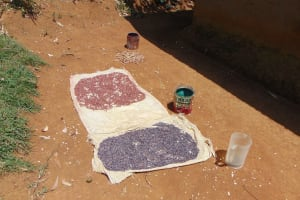 The Water Project: Munenga Community, Francis Were Spring -  Beans Drying