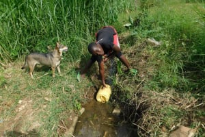 The Water Project: Emurumba Community, Makokha Spring -  Fetching Water In The Stream
