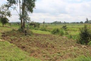 The Water Project: Kalenda B Community, Lumbasi Spring -  Farm Lands