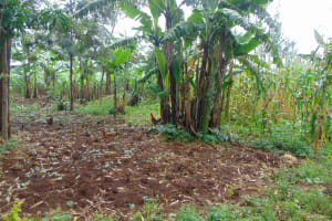 The Water Project: Namarambi Community, Iddi Spring -  Farm