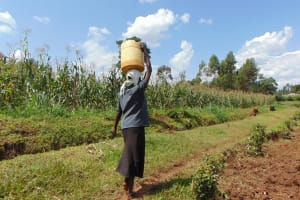 The Water Project: Musiachi Community, Mutuli Spring -  Carrying Water