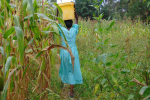 The Water Project: Mubinga Community, Mulutondo Spring -  Walking Through Fields With Water