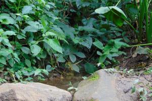 The Water Project: Mubinga Community, Mulutondo Spring -  Water Pools Behind Spring