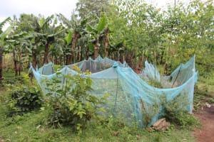 The Water Project: Imbinga Community, Imbinga Spring -  Garden