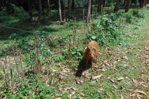 The Water Project: Jivovoli Community, Magumba Spring -  Sheep Grazing