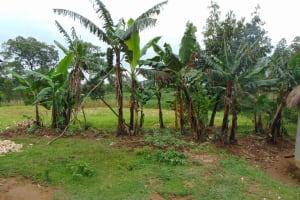 The Water Project: Buyangu Community, Mukhola Spring -  Banana Trees