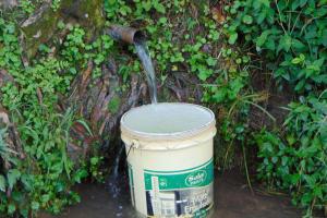 The Water Project: Buyangu Community, Mukhola Spring -  Bucket Fills At The Spring