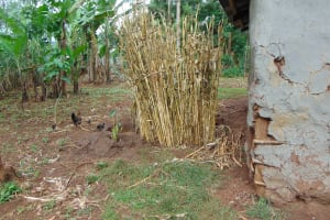 The Water Project: Buyangu Community, Mukhola Spring -  Bathroom Made With Maize Stems