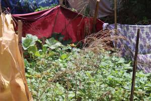 The Water Project: Masuveni Community, Masuveni Spring -  Kitchen Garden