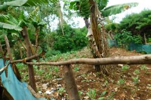 The Water Project: Kerongo Secondary School -  Banana Plantation