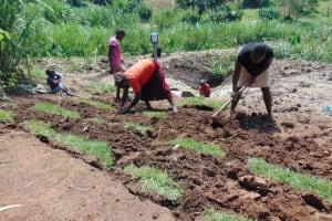 The Water Project: Shihungu Community, Shihungu Spring -  Grass Planting