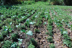 The Water Project: Luyeshe Community, Matolo Spring -  Bilhas Demonstration Garden