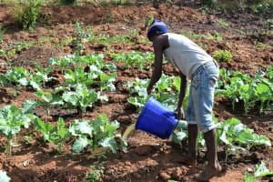 The Water Project: Masaani Community -  Watering Crops With Water From The Dam