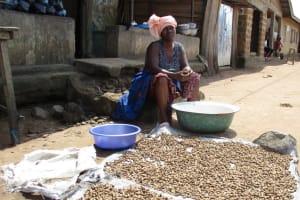 The Water Project: Lungi, Masoila, #3 Kamara Street -  Drying Groudnuts