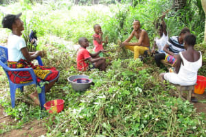 The Water Project: Lungi, Lungi Town, Holy Cross Primary School -  Community Members Harvesting Groundnuts