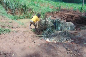 The Water Project: Shamakhokho Community, Imbai Spring -  New Cement Covered With Banana Leaves To Prevent Washout